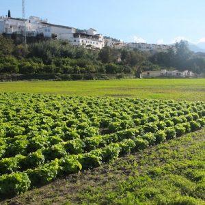 Organic Food in Marbella