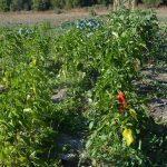 organic-food-marbella11 copy