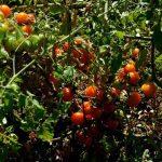 organic-food-marbella6 copy