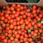 organic-food-marbella8 copy
